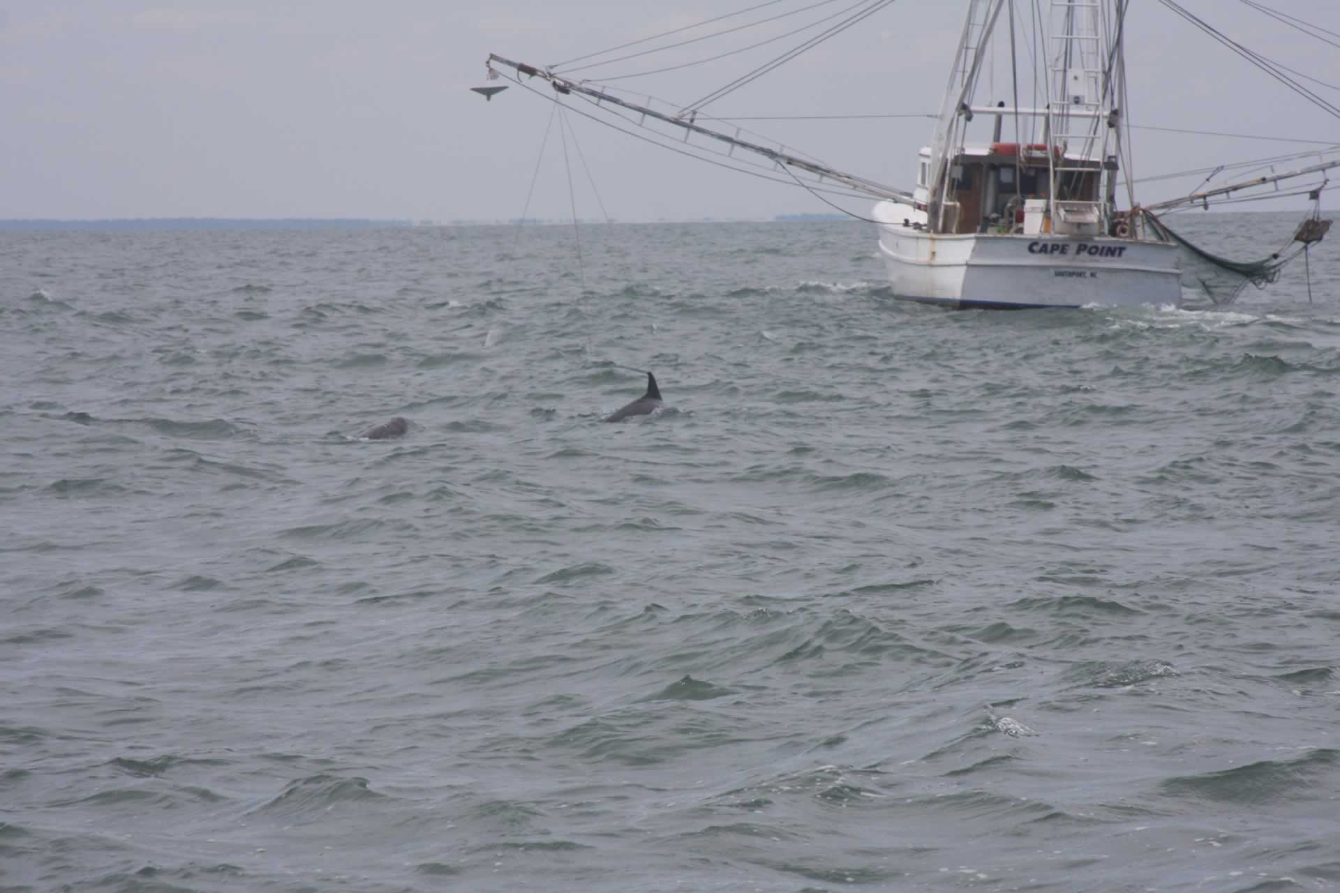 p_Holden_Beach_Fishing_Holden_Beach_Fishing_Dolphins_3.jpg